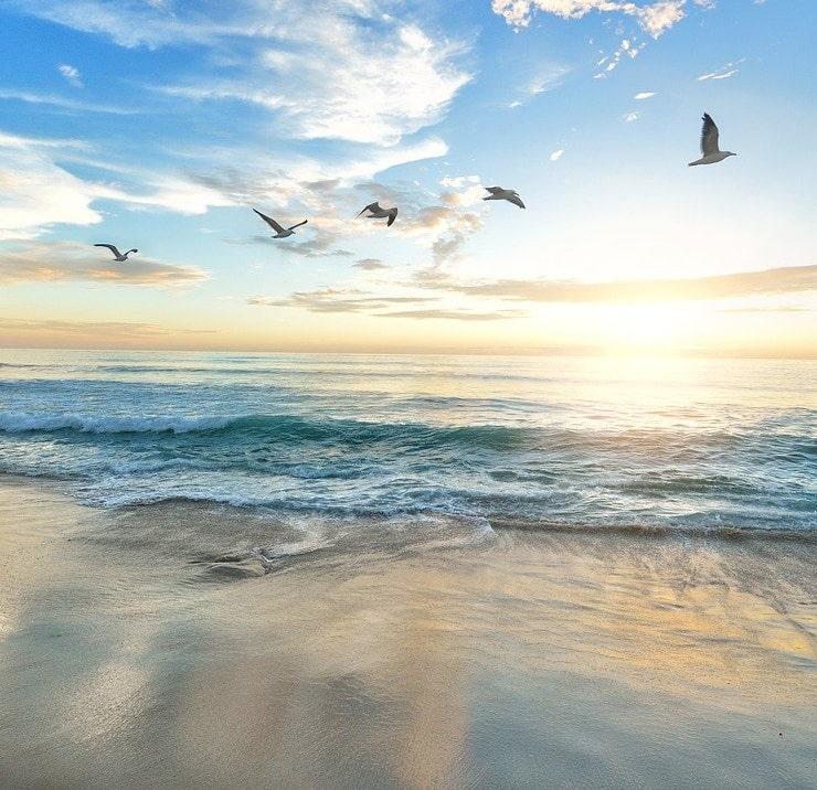 beach seaguls